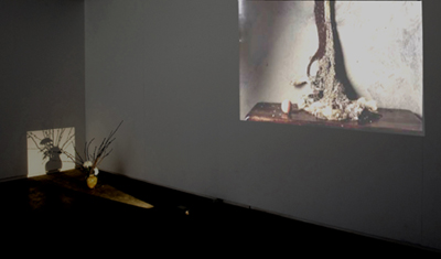 Exhibition: Still:Life (Naturaleza:Muerta) (Partial view Hall 3)